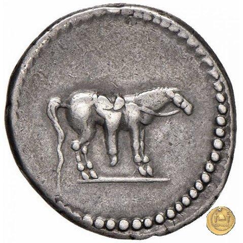 524/2 - denario Q. Labienus Parthicus 40BC (Itinerante con Labienus)